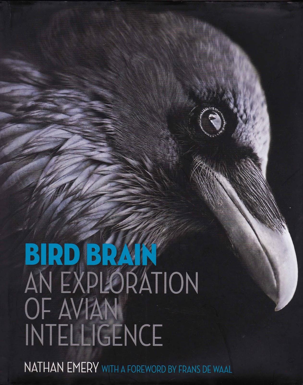 How birds think: What Birds belong in the \