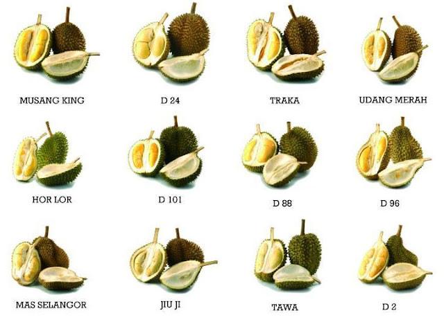 Jenis-jenis Durian Di Malaysia