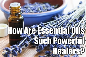 How Are Essential Oils Such Powerful Healers?