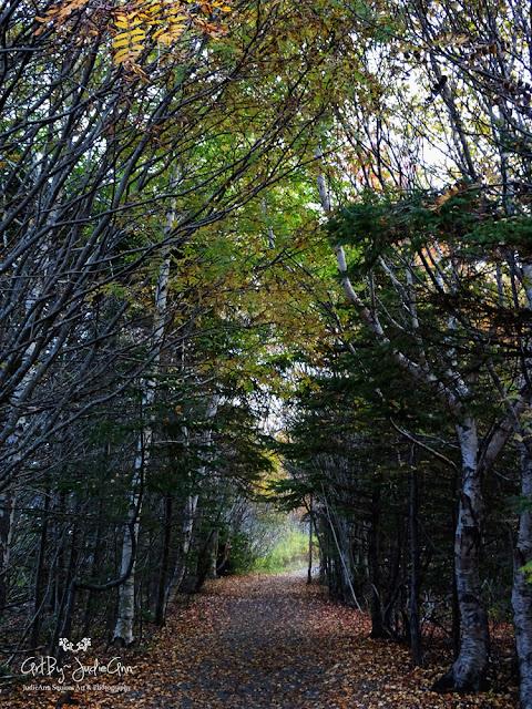 Newfoundland Trails