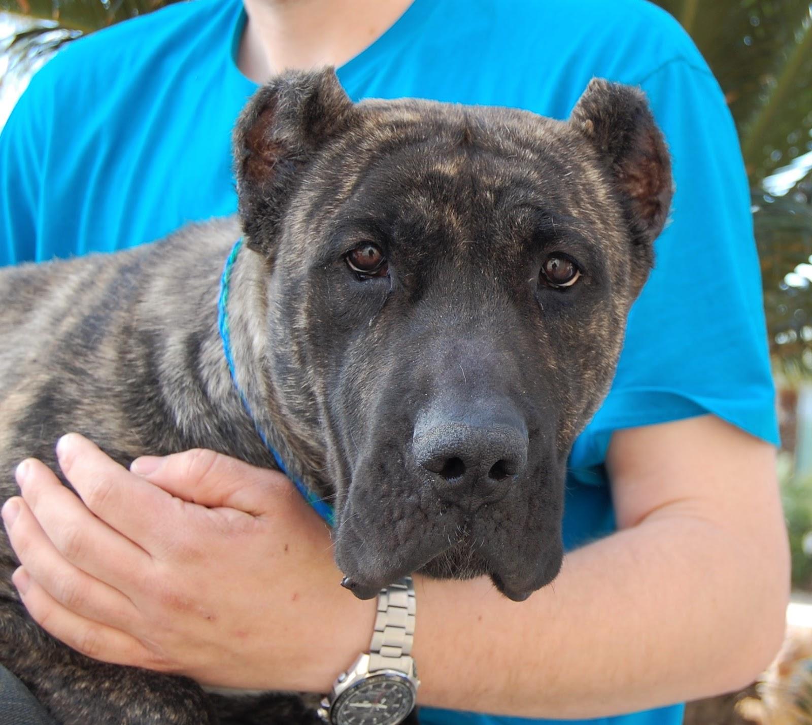 Nevada spca animal rescue before after tia for Dog pound las vegas nevada