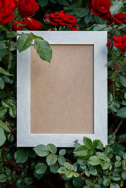 Empty Photo Frame Surrounded With Roses in Natural Environment Free JPEG Image