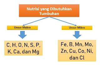 Jenis-jenis Unsur Makro dan Mikro yang Dibutuhkan oleh Tumbuhan Beserta Fungsi dan Akibat Defisiensinya
