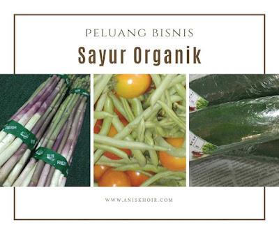 Peluang Bisnis Sayur Organik