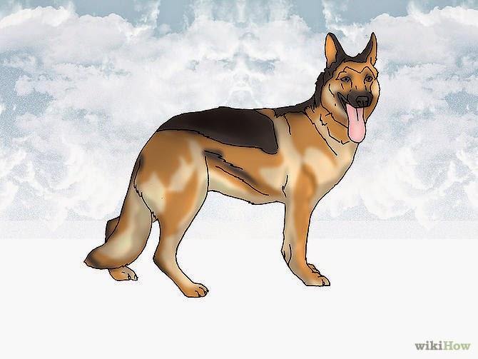 Olhe para a sua postura de cão