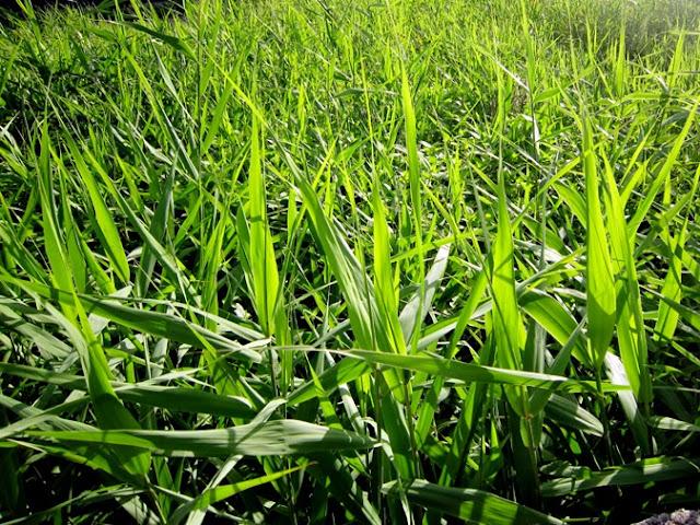 野草の数々