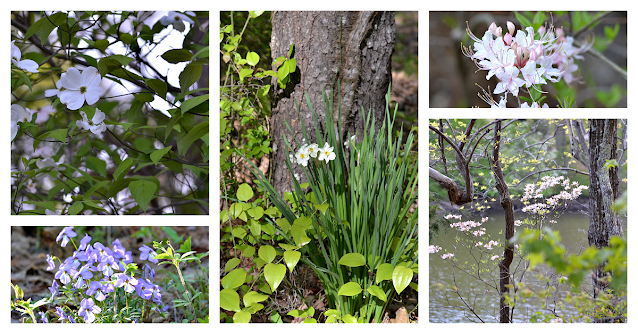 Natchez Trace State Park Flower Photos