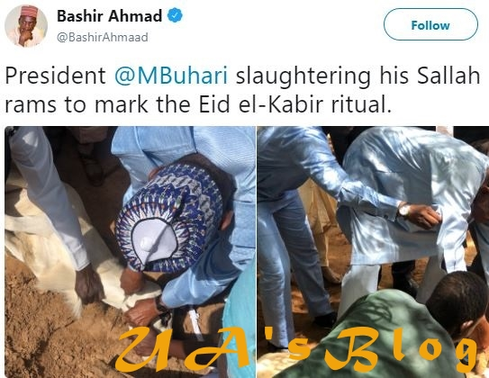 Photos Of President Buhari Slaughtering His Sallah Ram In Daura Emerge Online
