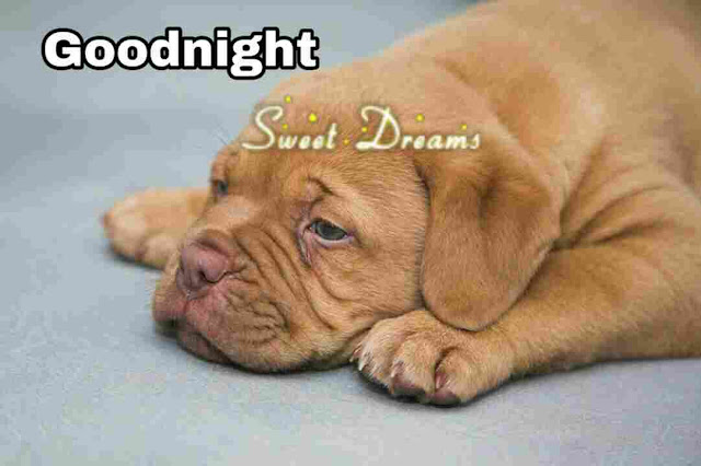 good night sweet dreams dog image download