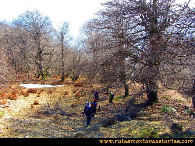 Ruta Requexón Valdunes, la Senda: Bajando de la Senda, cruzando bosque