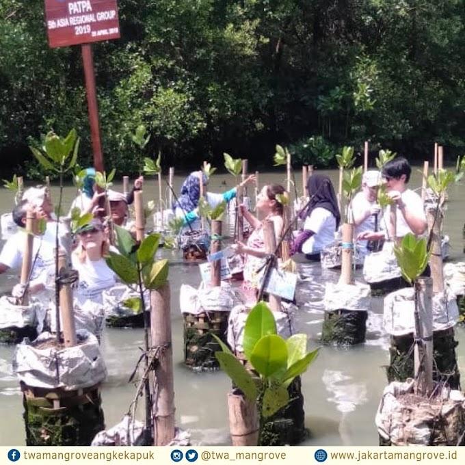 17 Hal yang  Bisa Dilakukan di Taman Wisata Alam Mangrove Angke, Nomor 3 Paket Wisata Alam Lengkap!