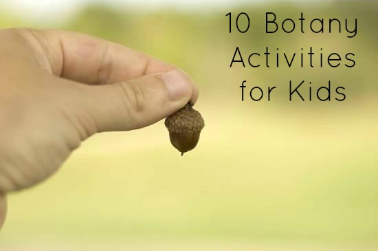 Translations Into Italian: 10 Botany Activities For Kids: Kid's Co-op