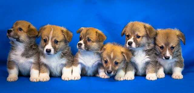 Very Cute Puppies Images HD Free Download