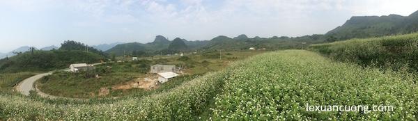Cánh đồng tam giác mạch - phượt Hà Giang 2015.