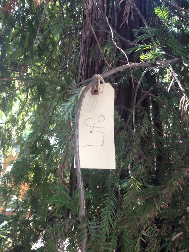words on a neighborhood Gratitude Tree