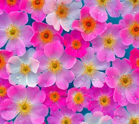 Giọt Mưa Trên Những Cánh Hoa Đẹp
