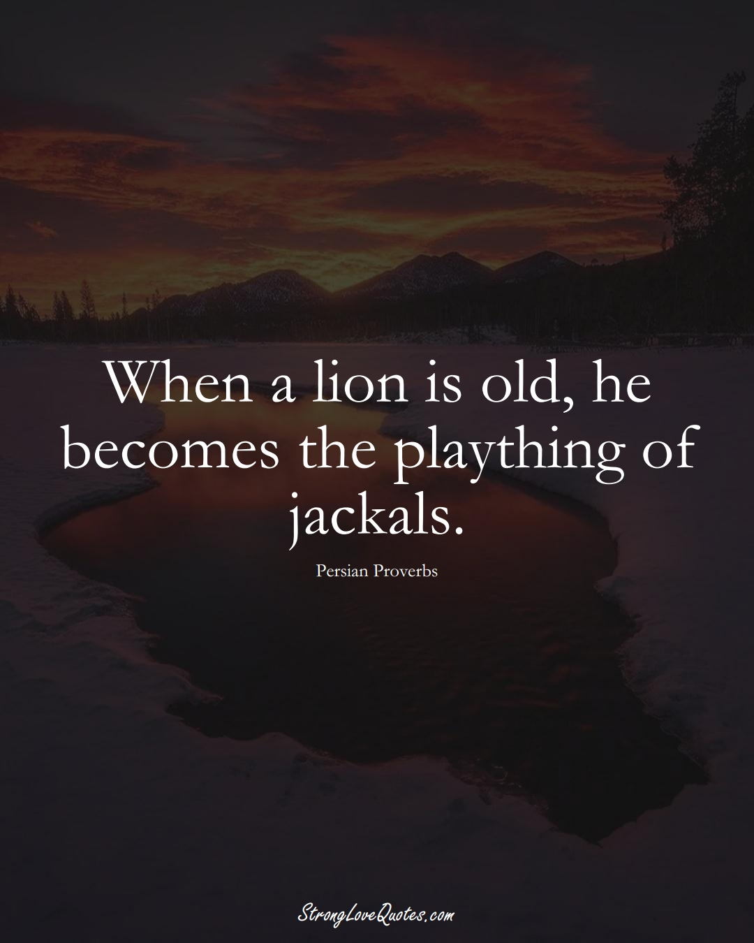 When a lion is old, he becomes the plaything of jackals. (Persian Sayings);  #aVarietyofCulturesSayings