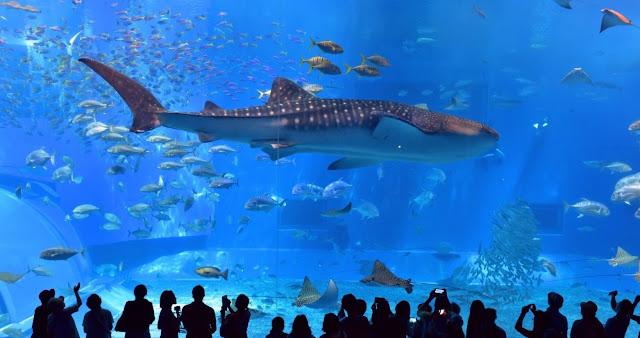 Yuk Intip Indahnya Pemandangan dan Tiket Osaka Kaiyukan Aquarium