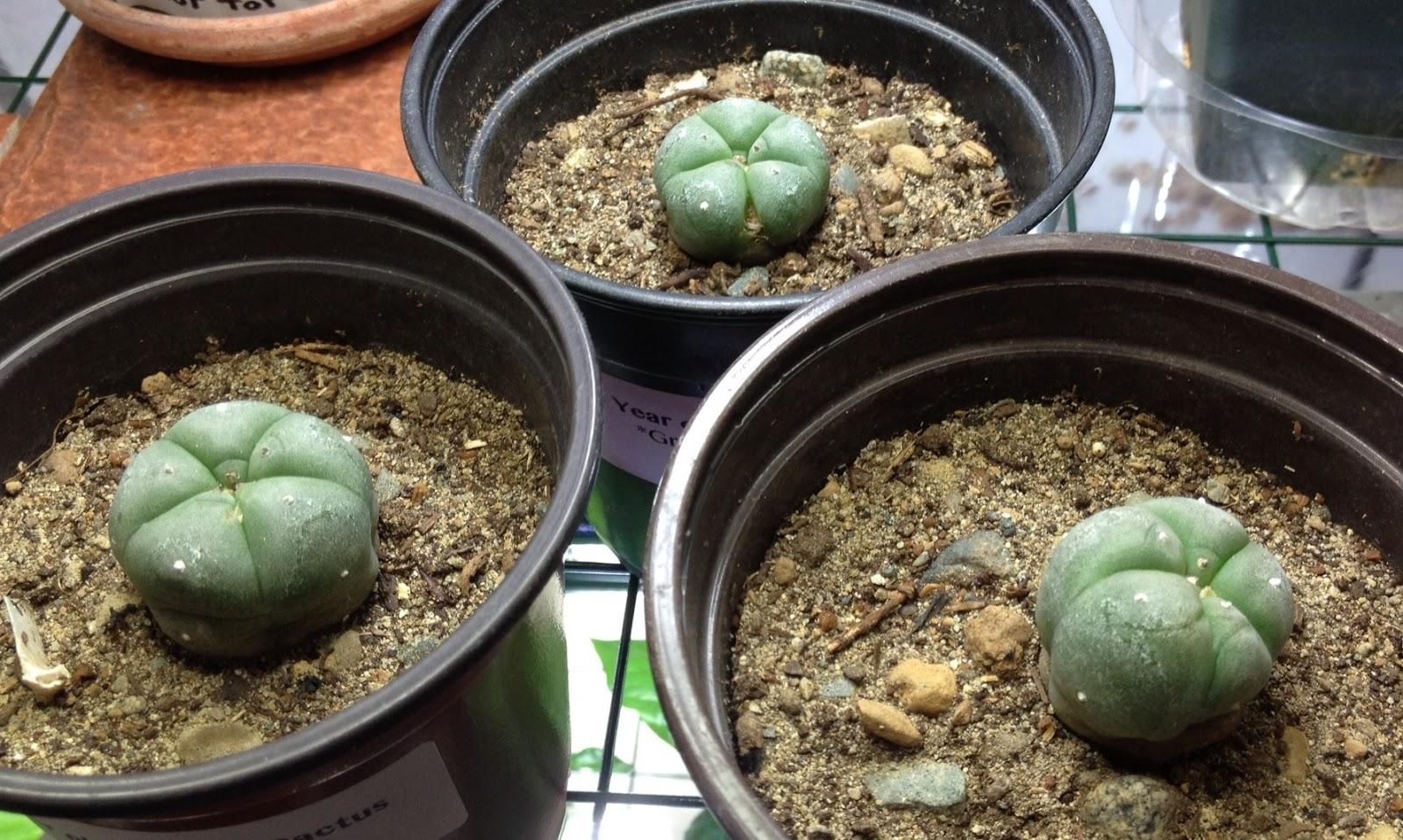 Succulent Plants Vancouver
