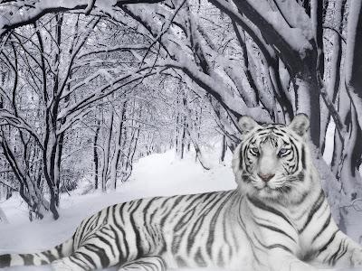 kar leosu dinleniyor