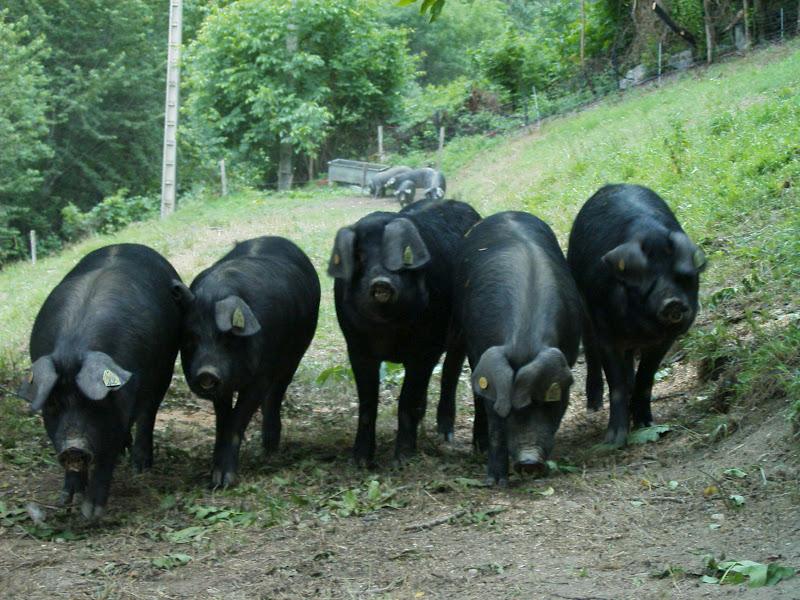 j 39 ai faim echine de porc noir grill e sauce fa on tajine tarbes pays basque. Black Bedroom Furniture Sets. Home Design Ideas