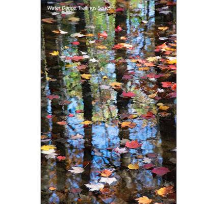 Water Dance by Sara Harley, Trailings Series