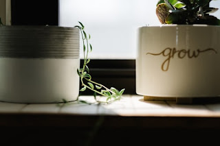 Close up of two pots with small plants. One pot has the word grow on it.
