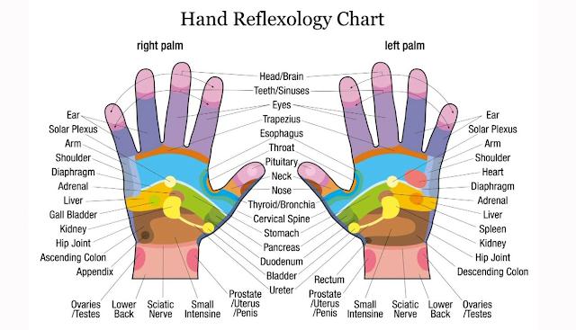 Palmar reflexology