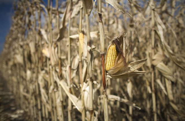 Action-Plan to tackle Adverse Impact of Global Warming on Food Crops