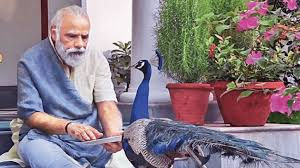 modi feed to bird