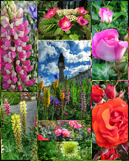 Flowers in Westport Ireland
