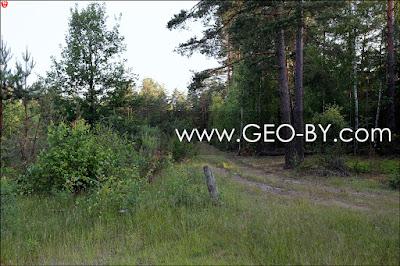 Лесной перекресток у деревни Язвины