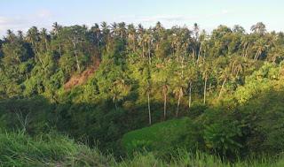 Indonesia, Isla de Bali, Ubud, Campuhan Ridge Walk o Sendero de la Palmera.