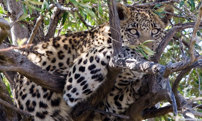 Two-year-old boy killed by a leopard in South Africa's Kruger National Park