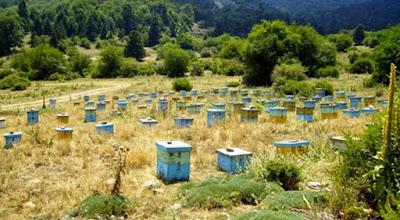 Στατική ή νομαδική μελισσοκομία? Τα υπέρ και τα κατά .