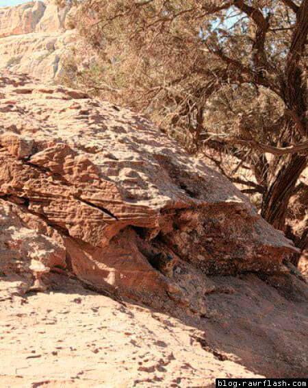 Gatinho na árvore escondido e camuflado