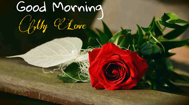 Good Morning Images With Red Rose Flower