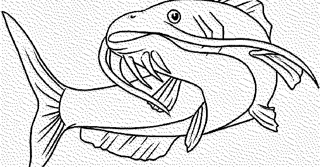 Gambar dan Foto Ikan Hitam Putih