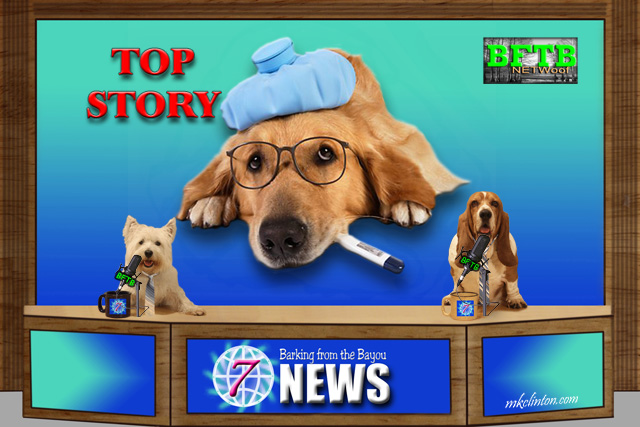 BFTB NETWoof News reports on the dog flu