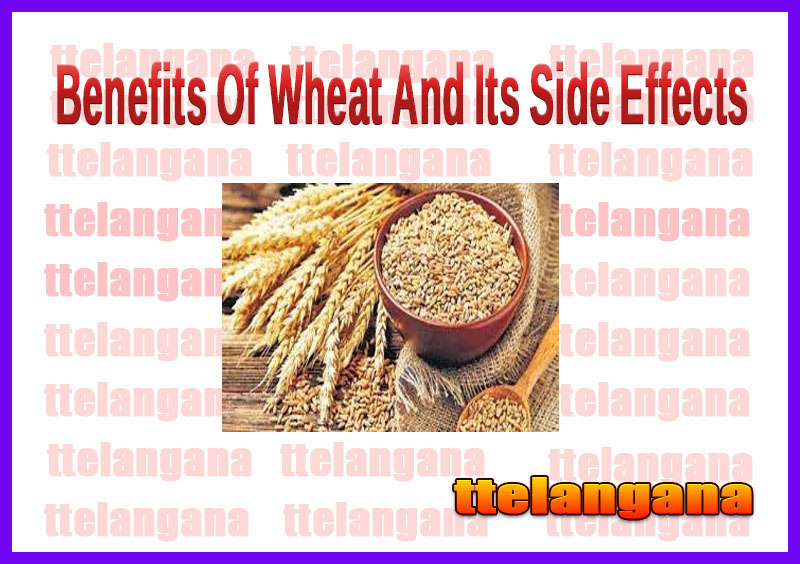 Benefits Of Wheat And Its Side Effects