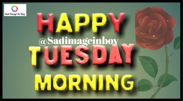Happy Tuesday images   good morning tuesday gif, happy tuesday pictures images photos