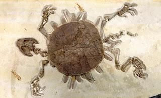 fossilshack.com