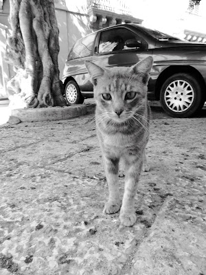 Kot w Trapani