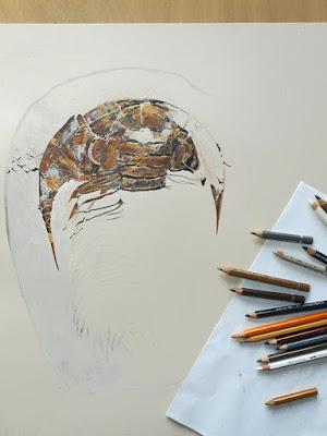 Début du dessin d'un trilobite de 36 cm avec la gamme des crayons de couleur à côté