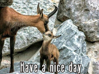 have a nice day images