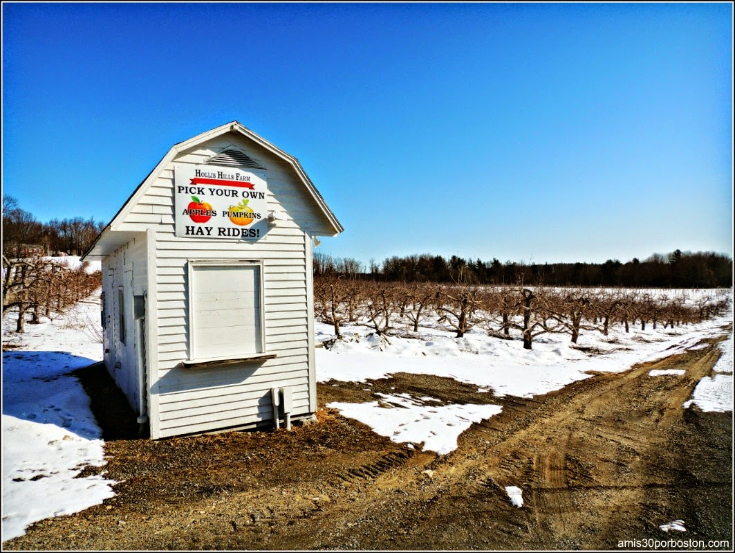 Maple Sugar Season en Massachusetts: Hollis Hills Farm