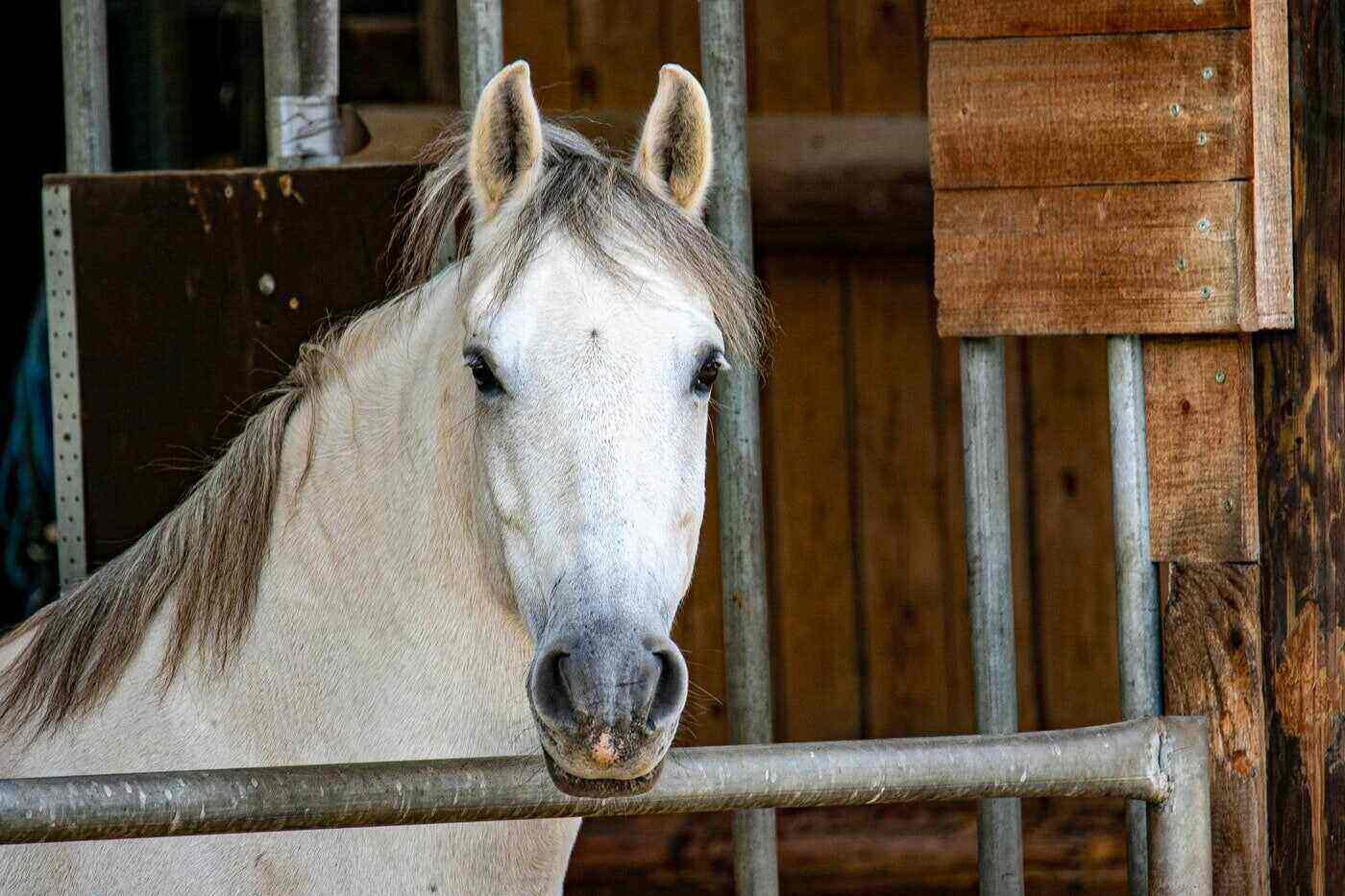 horse looking out of stall - how to care for a sick or injured horse