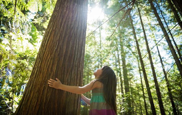 ¡Comprobado por la ciencia! abrazar árboles beneficia tu salud