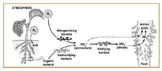 Gambar 12. Bagan Proses Kemosintesis - Sumber: scienceandenvironmentyear3.com