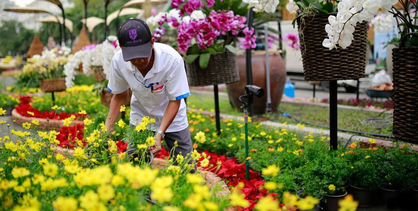 Tết ở Sài Gòn rất chán, chẳng có gì vui nên mọi người kéo hết về quê hoặc đi du lịch